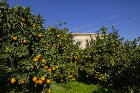 portokalia1